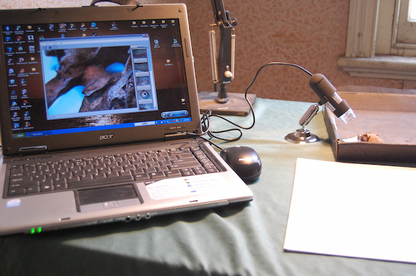 Examining artefacts under microscope