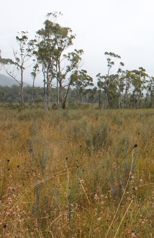 deb wace buttongrass plain.jpg