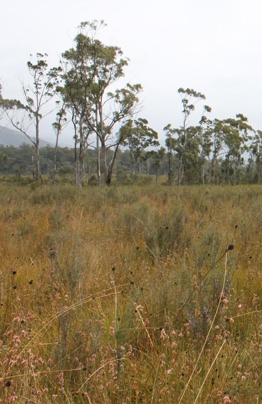 deb wace buttongrass plain.jpg