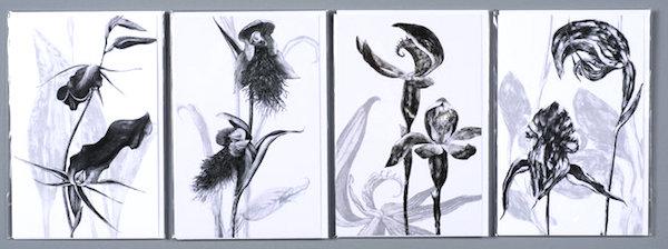 deb wace orchid prints.jpg